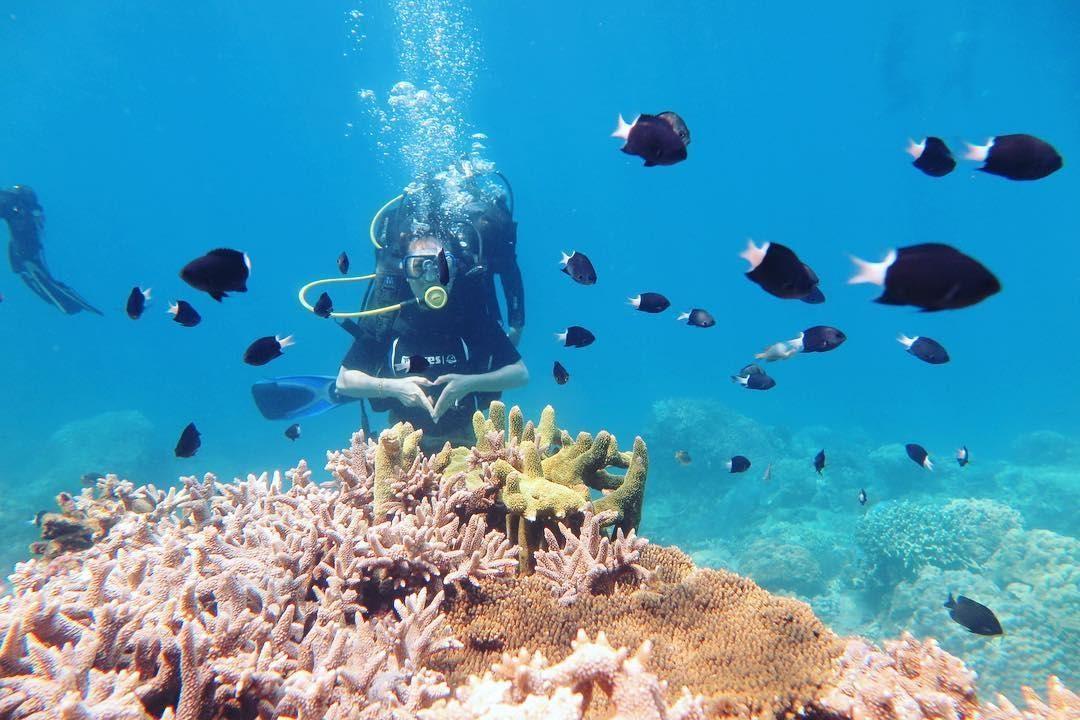 lặn ngắm san hô tại eo gió