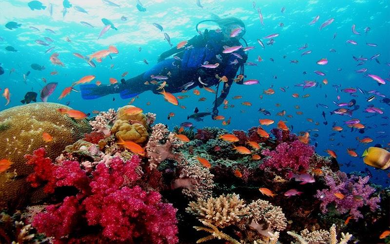lặn ngắm san hô eo gió kỳ co